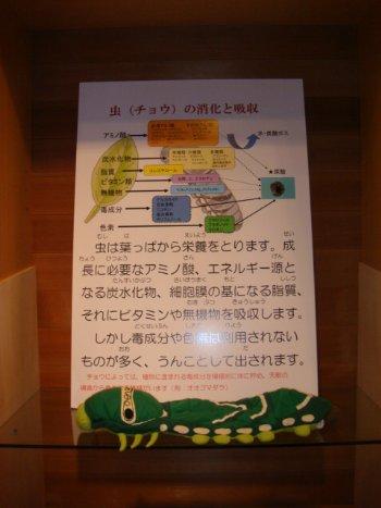 うんこ2_350.jpg