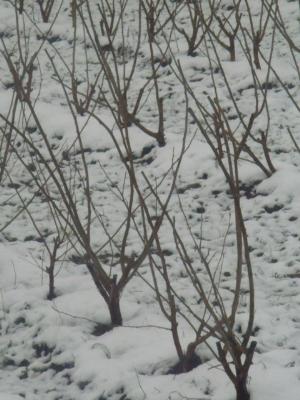 冬の大呂12・21・日90_400.jpg