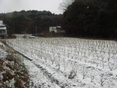 冬の大呂21・12・21日8_400.jpg